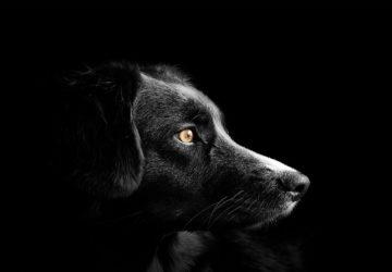 Testamento de un perro 1920