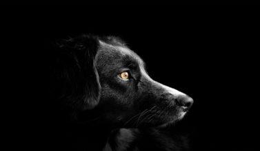 Testamento de un perro
